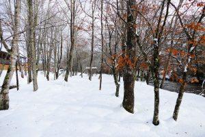 Mtn-River-Ext-Snow