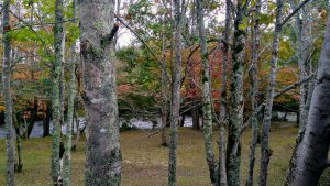 Mtn River Log Cabin - Linville River View #2
