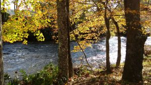 Mtn River Log Cabin - Linville River View #3