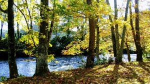 Log Cabin Rental near Lniville Falls