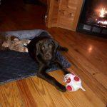 Pet Friendly Cabin Rentalss